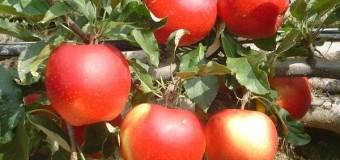 Commento al Vangelo del giorno: 28 Giugno 2017 – Offrire frutti di bene