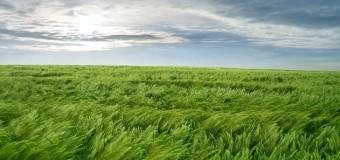 L'uomo: l'erba, come un soffio – Commento al Salmo 144