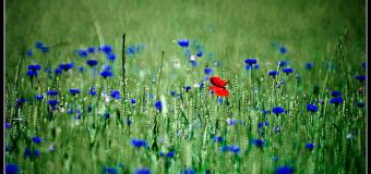 Commento al Vangelo del giorno – 23 agosto – L'amore vicendevole
