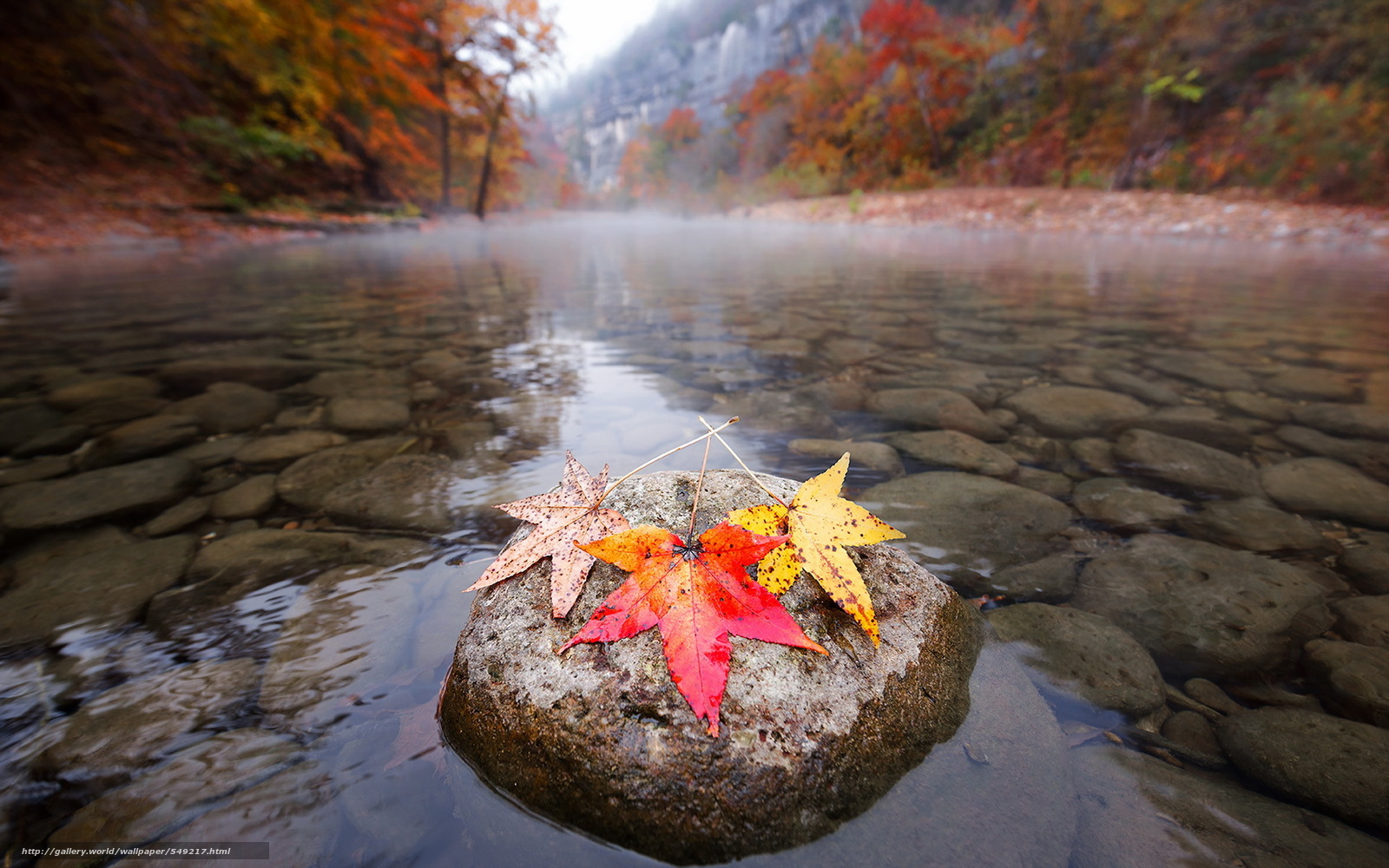 549217_autumn_fall_nature_river_leaves_colorful_1920x1200_www_gde-fon_com