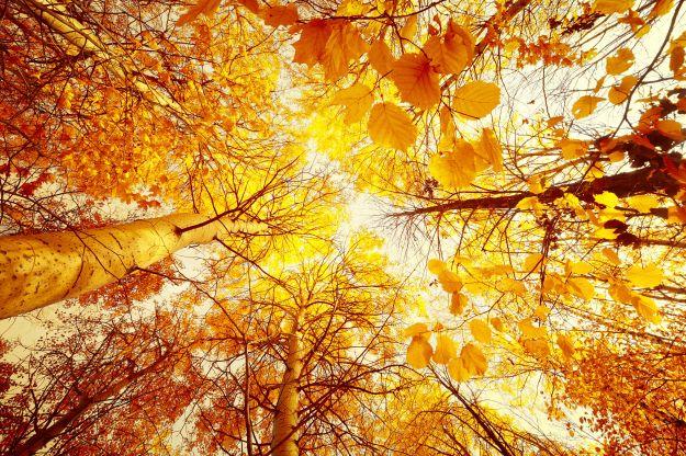 foto-autunno-sole