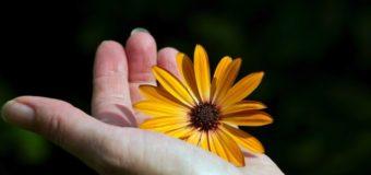 Il Santo del Giorno: 17 agosto – San Giacinto Odrovaz – Confessore