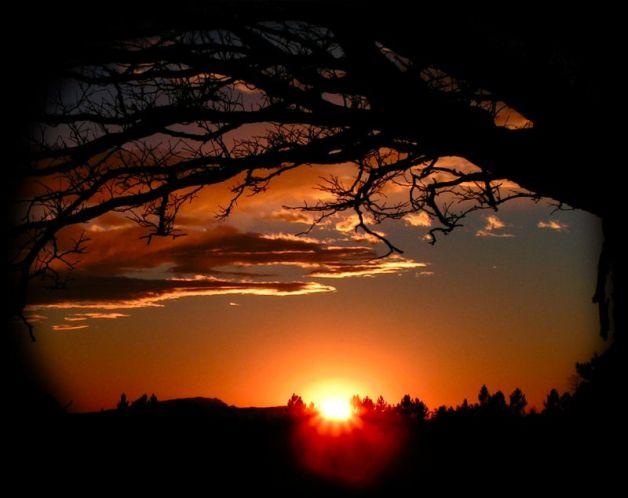 Commento al Vangelo del giorno: 29 Marzo 2020 – Il Dio che sceglie gli ultimi