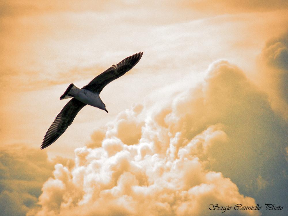 Commento al Vangelo del giorno: 12 Settembre 2019 – ...Volate alto!