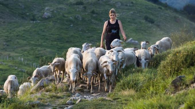 pastore-e-donna