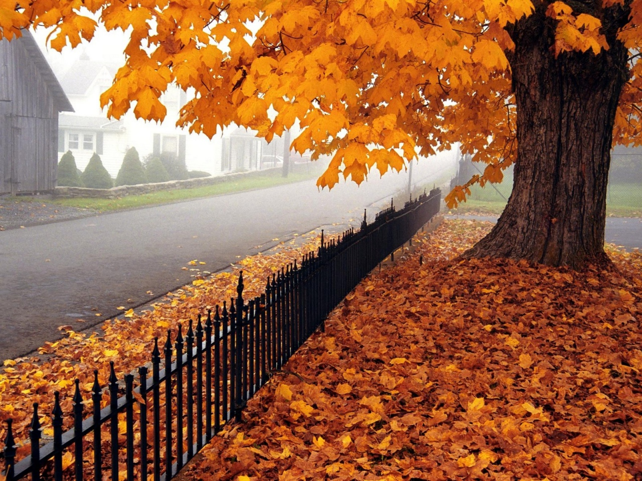 autumn-tree-leaves-fence-fencing-west-virginia