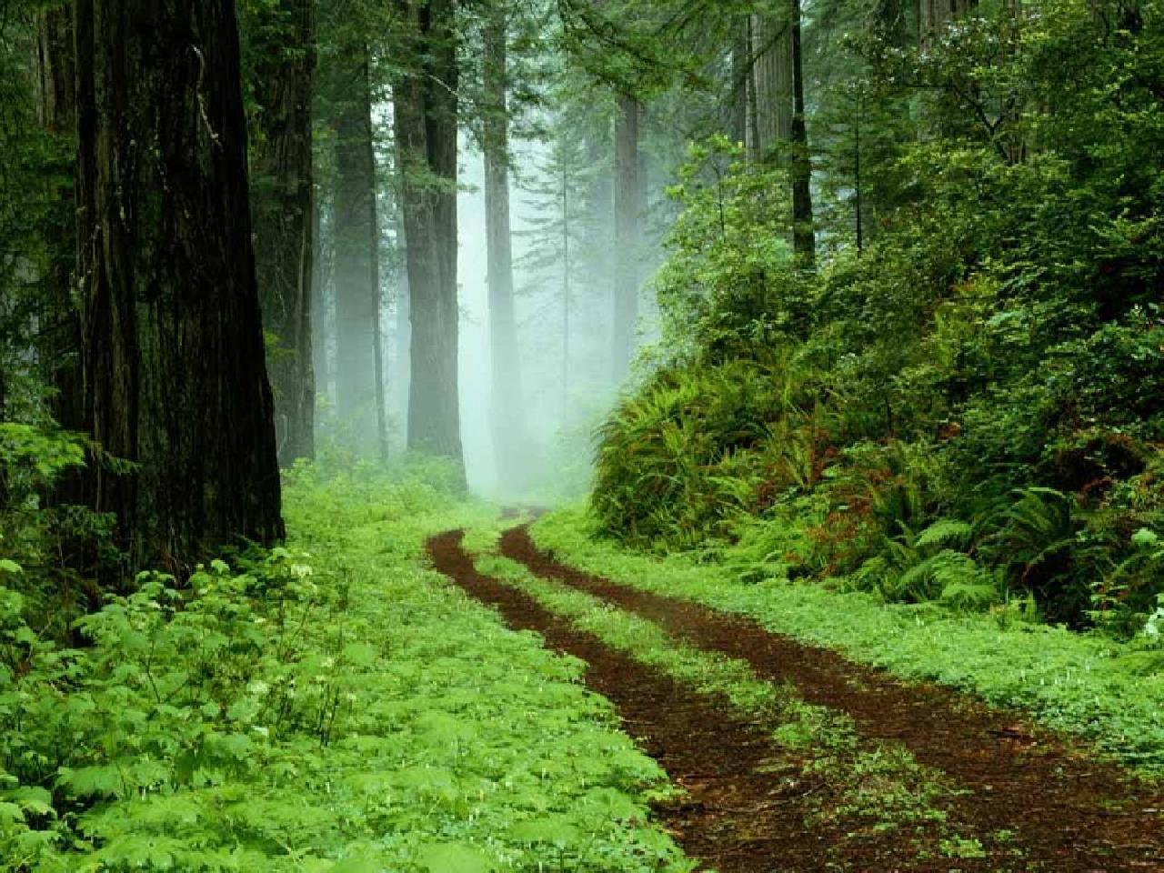 sfondi-desktop-foreste-immagini-pc-gratis-bosco-rigoglioso-1