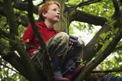 arrampicarsi su albero