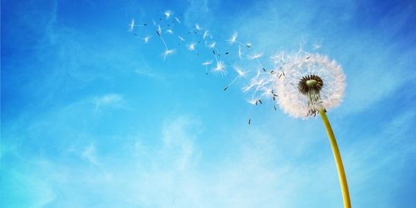 Commento al Vangelo del giorno: 16 Dicembre 2020 – La tua parola ridona la vita